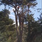 ArboristTreeWorks2