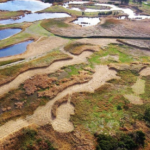 Grooming in wetlands